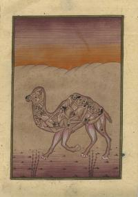 CAMEL COMPRISED OF EROTIC LOVERS