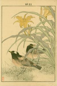 DAY LILY, STARLING
