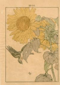 SUNFLOWER, YELLOW BUNTING
