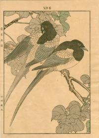MULBERRY, MAGPIE