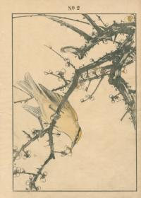 WHITE PLUM BLOSSOM, BLACK-NAPED ORIOLE