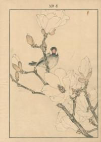 WHITE MAGNOLIA, JAVA SPARROW