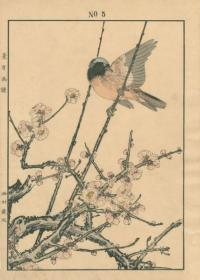 RED PLUM BLOSSOM, DAURIAN REDSTART