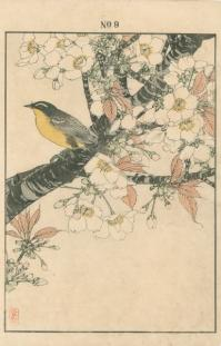 JAPANESE FLOWERING CHERRY, MUGIMAKI FLYCATCHER