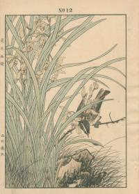 ORCHID, JAPANESE HEDGE SPARROW