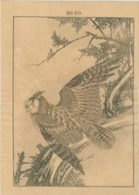 HINOKI FALSE CYPRESS, OWL