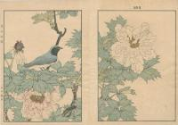 TREE PEONY, BLUE & WHITE FLYCATCHER
