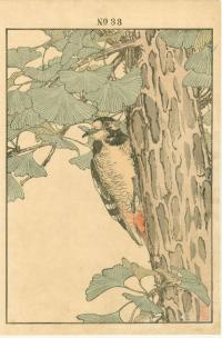 GINKO TREE, HONSHIU GREAT SPOTTED WOODPECKER