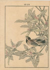 WINTER DAPHNE SWINHOE'S REED, BUNTING