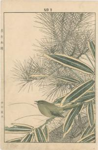 RED PINE, MOUNTAIN WHITE BAMBOO BUSH WARBLER