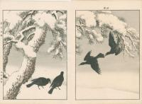BLACK PINE UNDER SNOW, LARGE BILLED CROW