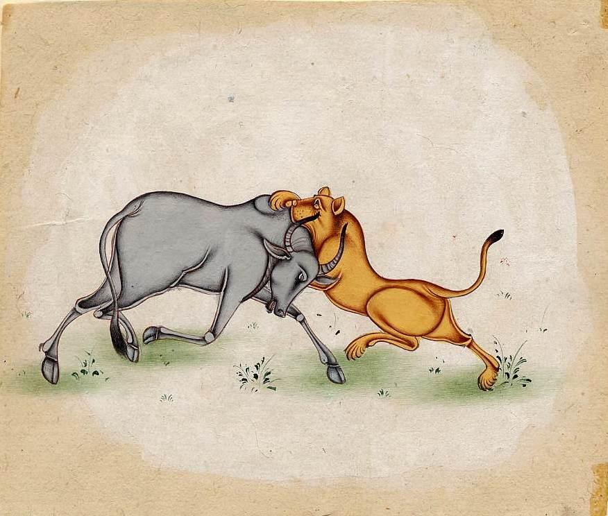 LION FIGHTING BULL