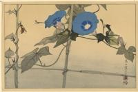 INSECTS WITH BEES AND MORNING GLORY