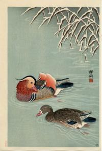 MANDARIN DUCKS IN THE SNOW