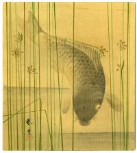 CARP AMIDST TALL GRASS
